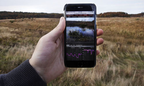 A research assistant holding up his phone to receive live stream video and audio data at a marshland in Plymouth, Mass.
